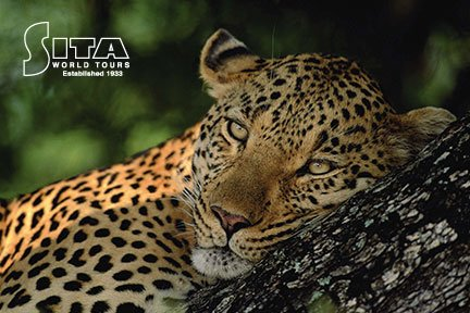 South Africa - Leopard