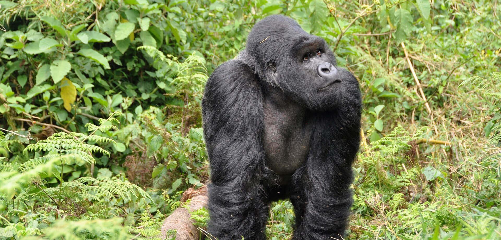 Rwanda - Country