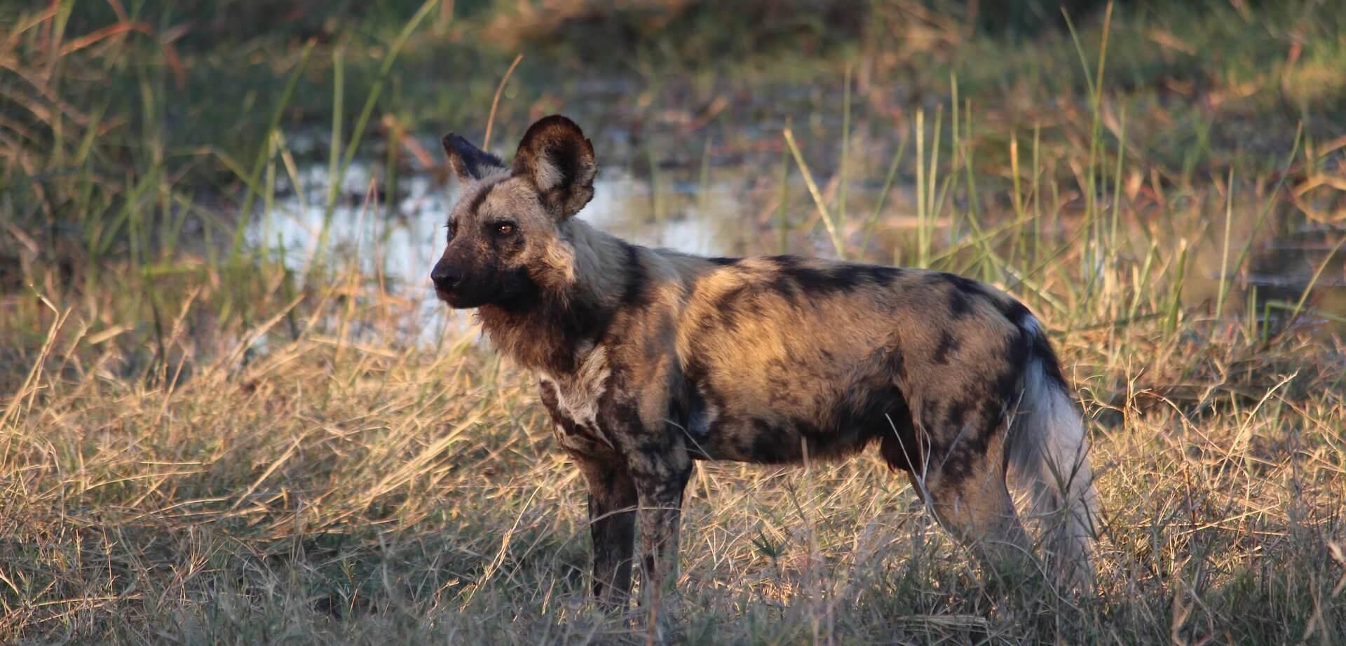 Moremi Wildlife Reserve